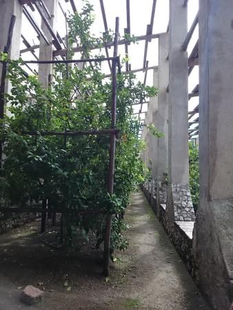 Limonaia, Garda
